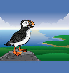 Puffin bird vector