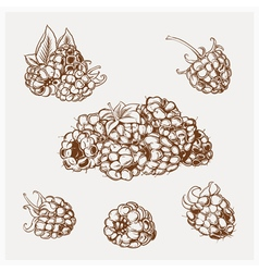 set of drawing raspberry vector image