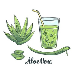 Slices of Aloe Vera in a glass Healthy cocktail vector image