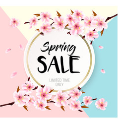 spring sale background with a pink blooming sakura vector image