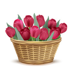 full wicker basket with red tulips vector image vector image