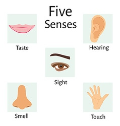 Five senses vector image