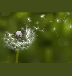 Dandelion seeds in the sunlight vector