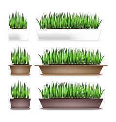 fresh green grass in a rectangular pots element vector image