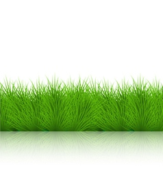 Grass on white background eps10 vector