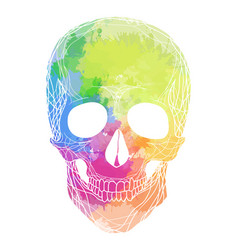 Human skull with rainbow watercolor splashes on a vector