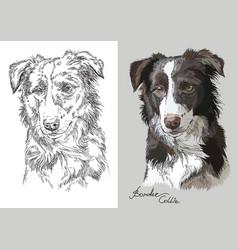 Portrait dog border collie vector