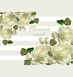 White roses flowers card realistic vector