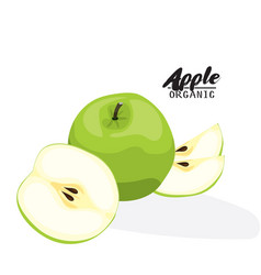 Cartoon apple ripe green fruit vegetarian vector