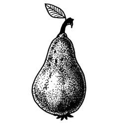 Fruit Doodle vector image