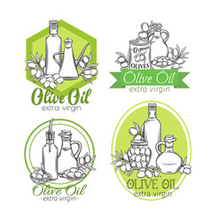Hand drawn sketch olives and olive oil vector