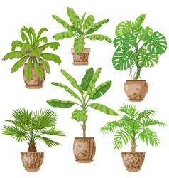potted tropical plants set vector image