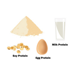 The main sources of protein for bodybuilders vector