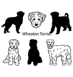 wheaten terrier set collection pedigree dogs vector image
