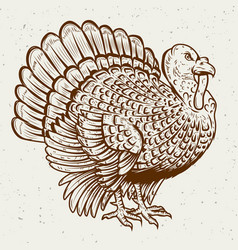 turkey on white background thanksgiving theme vector image