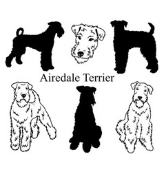 Airedale terrier set collection pedigree dogs vector