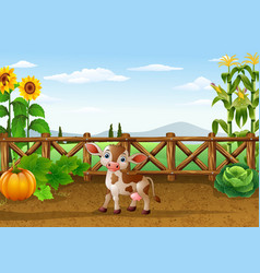 cartoon cow in the farm vector image