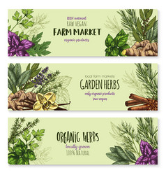 Sketch banners of spice and herb seasonings vector