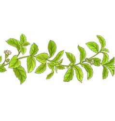 Stevia branch pattern vector