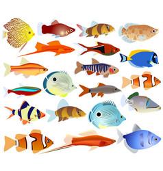 a set of aquarium fish vector image