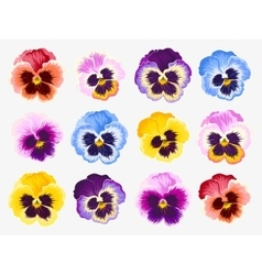 Set pansy flowers vector