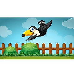 Toucan flying over the field vector image