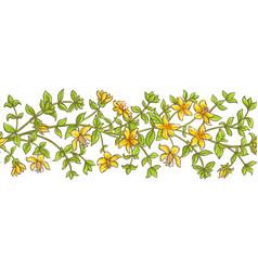 tutsan branch pattern vector image