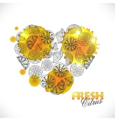 Isolated heart of citrus vector image