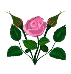 bush rose on a white background vector image