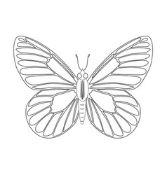 colorless butterfly isolated vector image