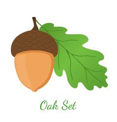 Acorn leaf oak nut seed cartoon style vector
