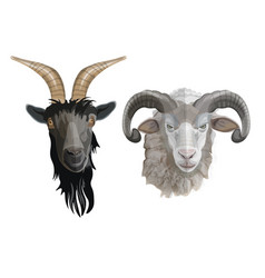 Goat and ram heads vector