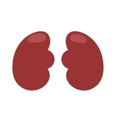Human liver vector image