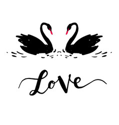 inscription love a couple of black swans vector image