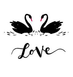 Inscription love a couple of black swans vector
