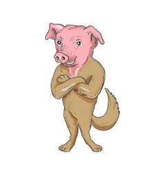 Pig dog standing arms crossed cartoon vector