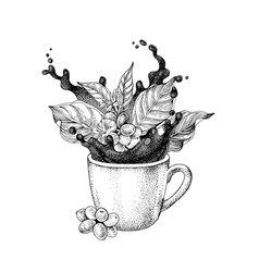 splash in a cup coffee vector image