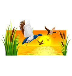 Wild ducks soaring from reeds vector