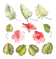 Hibiscus single tropical flower vector image vector image