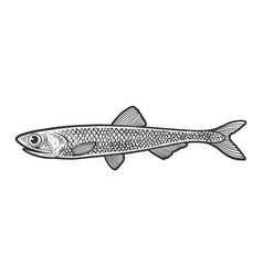 Anchovy fish sketch vector