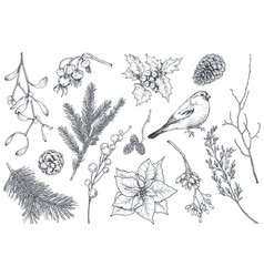 collection natural christmas objects - plants vector image
