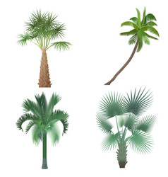 Exotic tropical realistic palm tree collection set vector