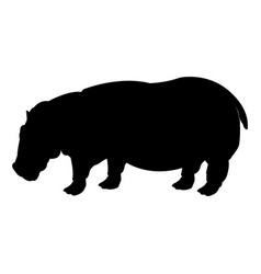 hippo standing animal naturalist wildlife style vector image