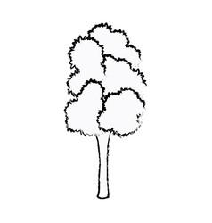 tree foliage trunk organic natural sketch vector image vector image