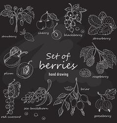 Set of garden berries on dark background vector image vector image