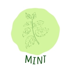 Mint branch vector image vector image