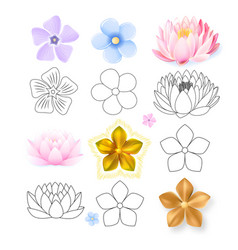 Pink lotus periwinkle forget-me-not pattern vector