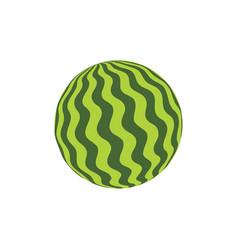 Watermelon rubber ball vector