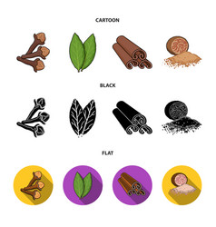Clove bay leaf nutmeg cinnamonherbs and spices vector