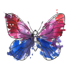 drawing butterfly vector image
